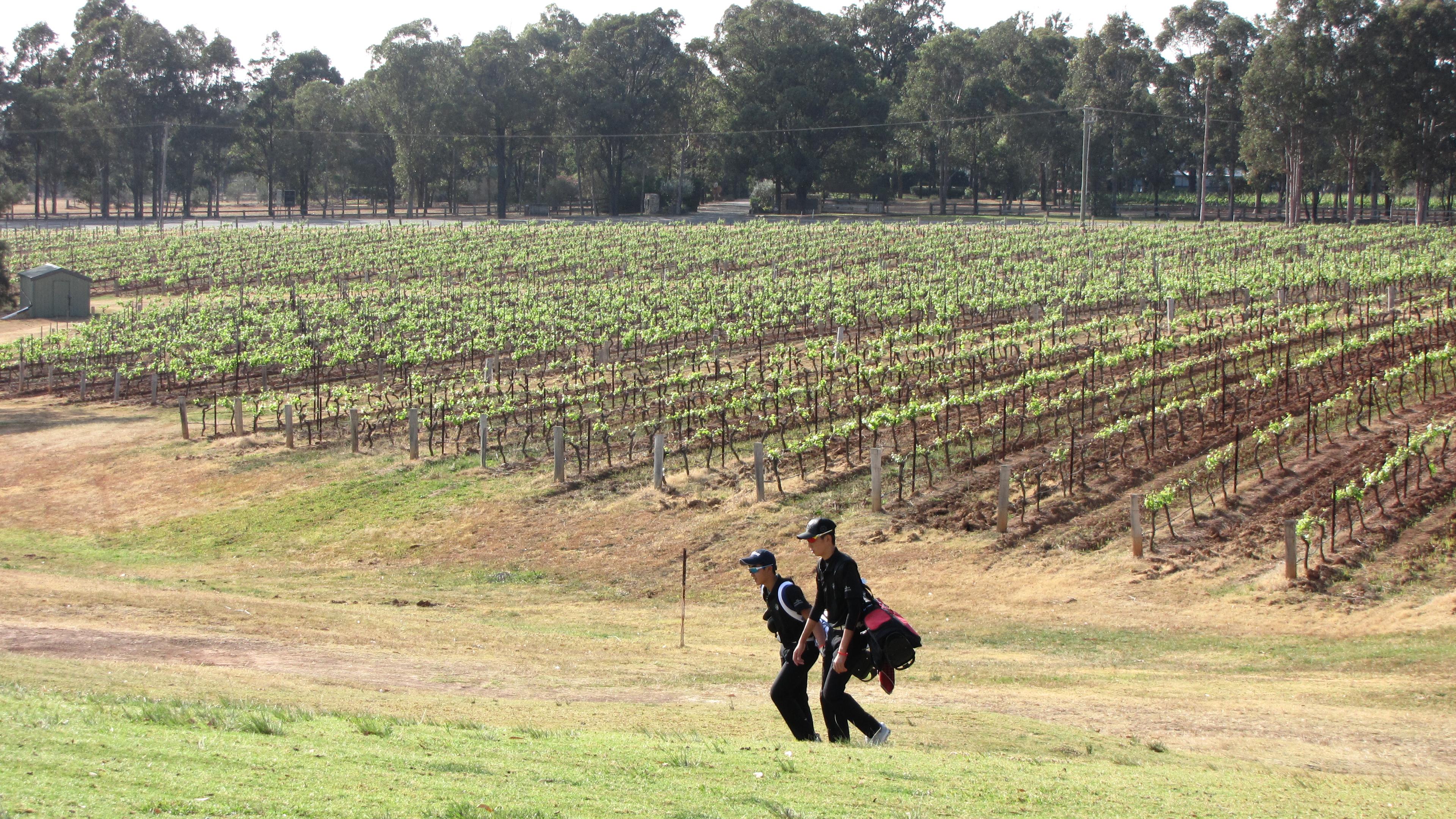 開催コースは世界的にも有名なワイナリーが数多く点在する地域(ハンターバレー)。ホールによってはぶどう畑が隣接する。